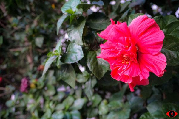 Landscape Flower